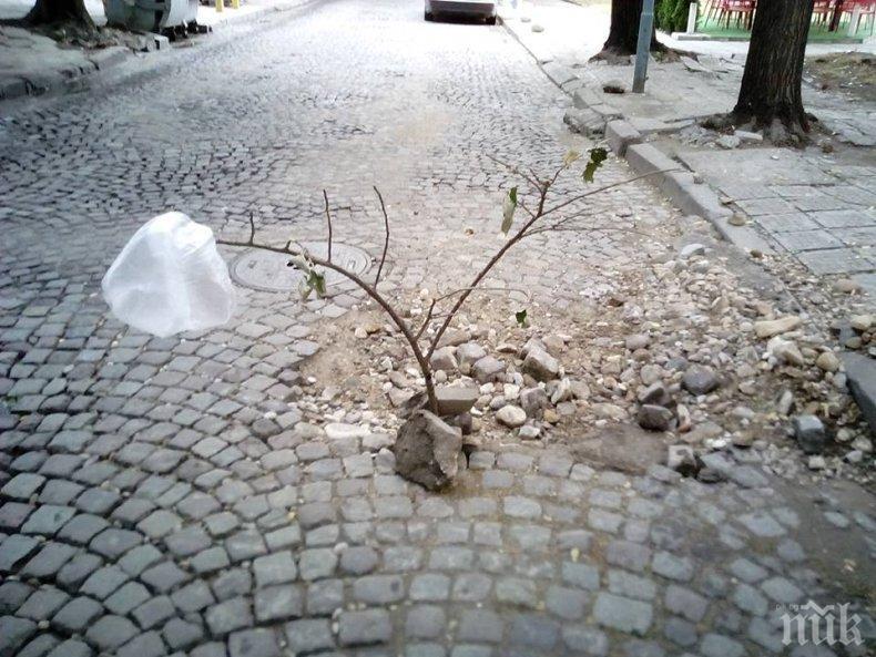 """РЕШЕНО: Улица """"Даме Груев"""" в Пловдив с второ платно - ето кога ще започне очакваният от 37 г. ремонт"""