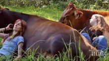 Село скочи на бунт срещу 40 крави