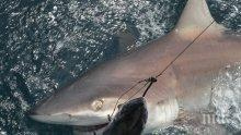 Уловиха 330-килограмова акула в Бяло море (СНИМКА)