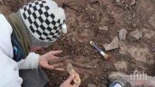 Откриха останки на 70 милиона години от мегараптор в Аржентина