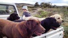 Във Великобритания обучават кучета да разпознават заразени с коронавирус