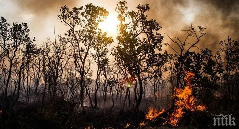 Горски пожари бушуват в Сърбия