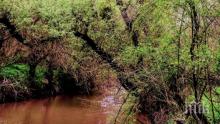 Розоварна в Старосел замърси 2 реки, които се вливат в язовир в Пловдивско