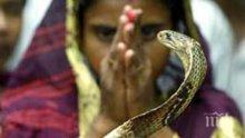 ШОК: Мъж уби жена си с отровни змии