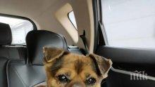 РАЗТЪРСВАЩО: Куче чака 3 месеца пред болница стопанина си, починал от COVID-19 (СНИМКИ)