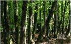 Поставиха под закрила 1690 декара вековни гори