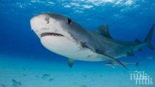 Акула сви плавника на млад австралиец, но го пощади