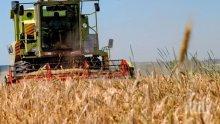Стопани очакват 50 процента по-ниски добиви на зърно