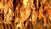 7 кг тютюн иззеха от 44-годишна плевенчанка