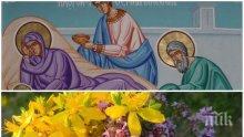 ГОЛЯМ ПРАЗНИК: Еньовден е - денят на лечебните билки! Небето се отваря и стават чудеса
