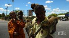 В Тайланд започнаха стерилизация на маймуни, тероризиращи туристически град