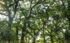 Инспектират над 10 000 дървета в Кюстендил
