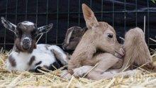 В зоопарка в Хасково черпят - роди се еленче