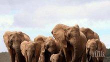 Мистериозна смърт на стотици слонове в Ботсвана