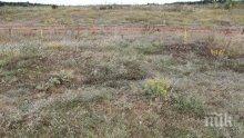Теренен мониторинг показва самовъзстановяване на понто-сарматски степи в района на Добруджа