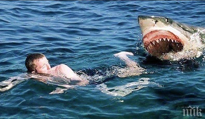 Акула уби водолаз в океана край Австралия