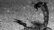 Учени откриха следи от гигантски скорпиони