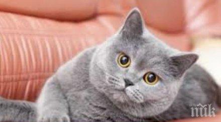 австралийка починала била одраскана котката