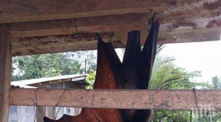 СТРАХОВИТО: Социалните мрежи загряха от СНИМКИ на огромен прилеп
