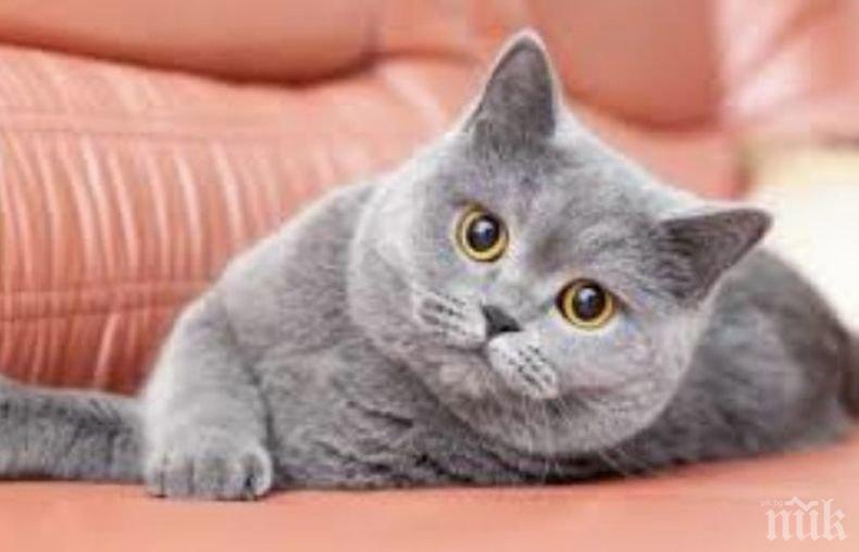 Австралийка починала, след като била одраскана от котката си
