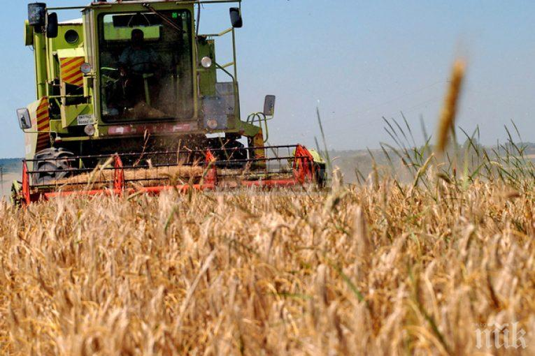 Рекордно ниски добиви от пшеница във Великотърновско