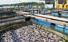 Кризата удари рибарниците в Родопите