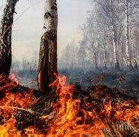 Избухна голям горски пожар в Източен Сакар