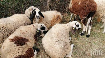 пожар изпепели овце яре тутракан
