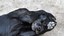 """ЗВЕРСТВО: Изхвърлиха куче в найлонов плик от 3-ия етаж на блок в """"Зaхaрнa фaбрикa"""""""