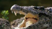 Младеж  влезе да се изкъпе в  река, стана жертва на крокодил
