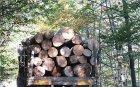 Прокуратурата погна бракониерите на дървесина в Симитли, Разлог и Банско
