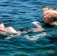 ШАНС: Сърфист оцеля след атака на акула