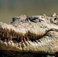 ОТМЪЩЕНИЕ: Крокодили изяли прочут бракониер, избил десетки защитени видове животни