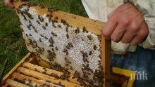 Отпуснаха над 500 000 лева кредити на пчеларите