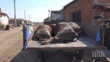 Доц. Ангел Кунчев: Остава забраната за пиене на вода от чешмите в района с отровените крави
