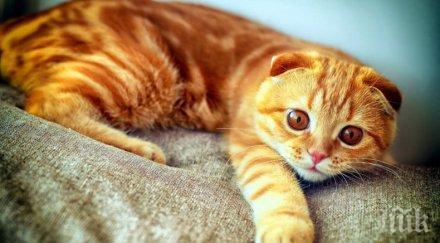 котка измина километра върне стопаните
