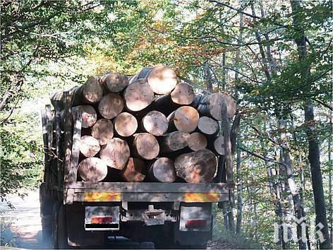 Прокуратурата погна бракониерите на дървесина в Симитли, Разлог и Банско - 9 са арестувани