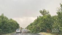 Гръмотевици събарят дървета по пътя за Хасково