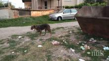 Криза с боклука в Карлово