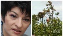СБЛЪСЪК НА ЦЕННОСТИ: Десислава Атанасова изригна срещу ближещите сладоледа на Доган на Росенец