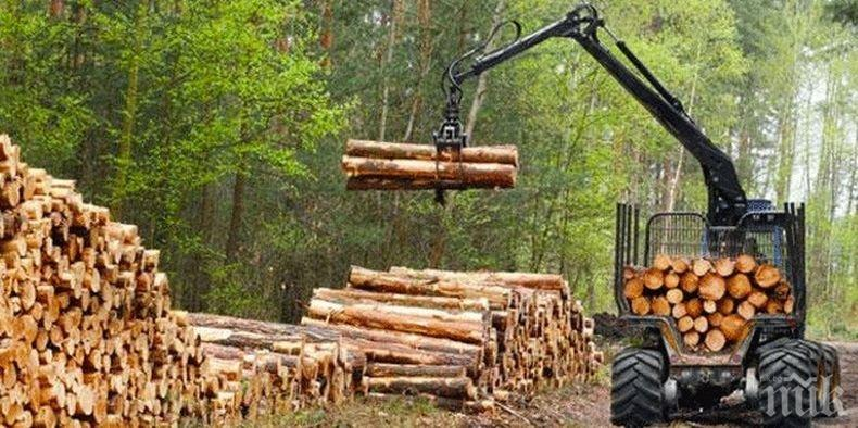 Драстичен спад в дърводобива във Великотърновско