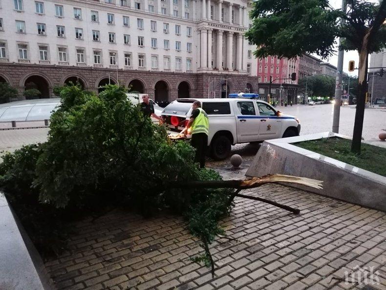 Силната буря в София събори дървета