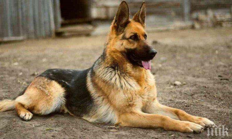 Туристка и хижар с взаимни обвинения заради куче