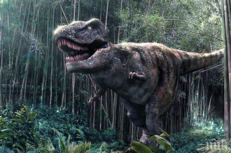 НАХОДКА: Откриха фосили от непознат динозавър, сродник на тиранозавър рекс