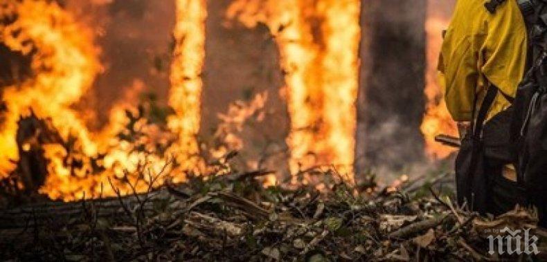 Пламна широколистна гора край Хасково