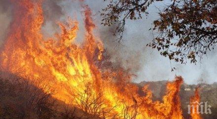 стихия голям горски пожар района свиленград