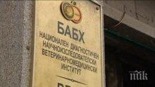 БАБХ стартира проверки в детски градини и училища