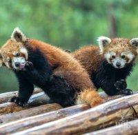 В Деня на София: Всички музеи и зоопаркът пускат без билет