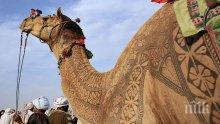 Откриха човешки стъпки на 120 000 години в Саудитска Арабия