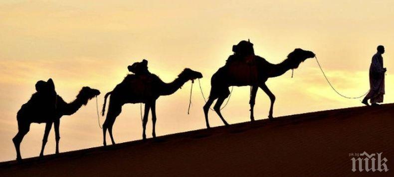 Индия въвежда на въоръжение… камили